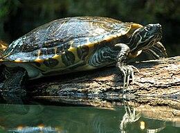 Teknősök rejtett bajai: teknősbetegségek - Gondozás