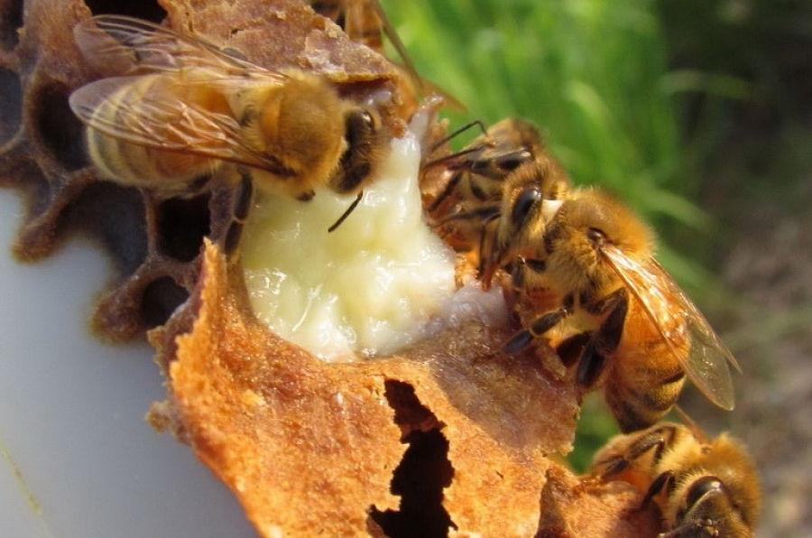 méhviasz kenőcs pikkelysömörhöz)
