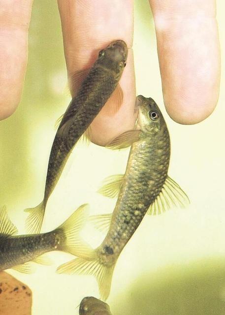 hal és pikkelysömör kezelése