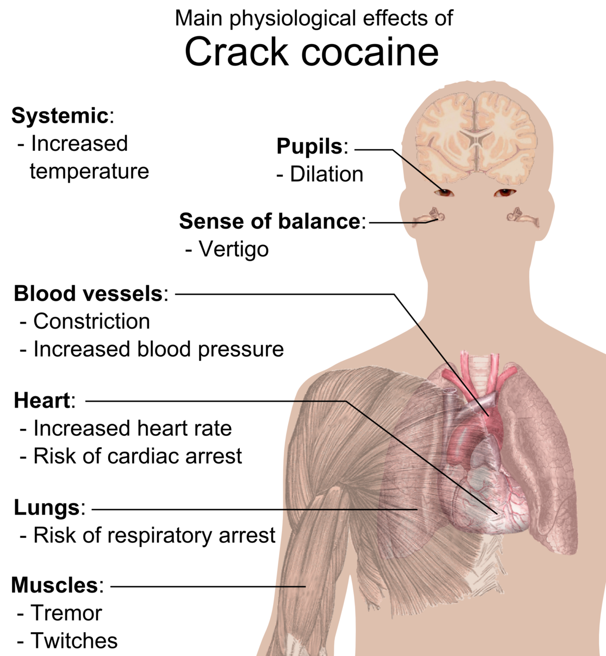 kenőcsök pikkelysömörhöz a holt tengerrl folyékony nitrogén pikkelysömör kezelés vélemények