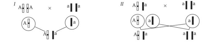 monoklonlis ellenanyagok ksztmnyei pikkelysömörhöz)