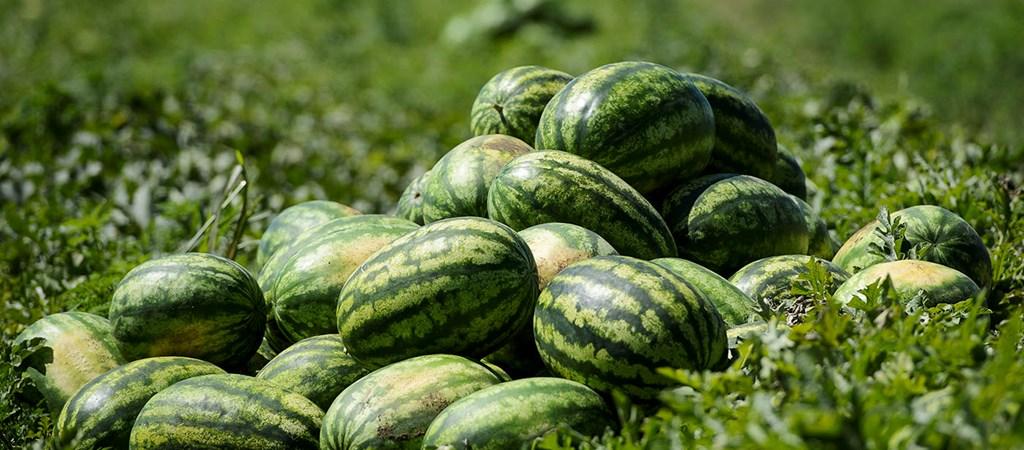 görögdinnye pikkelysömör kezelés vélemények a pikkelysömör legjobb kezelse