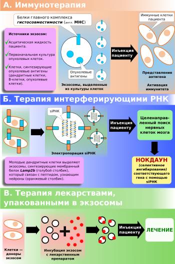 Biohasonló monoklonális antitest az Egistől | sunnymodell.hu