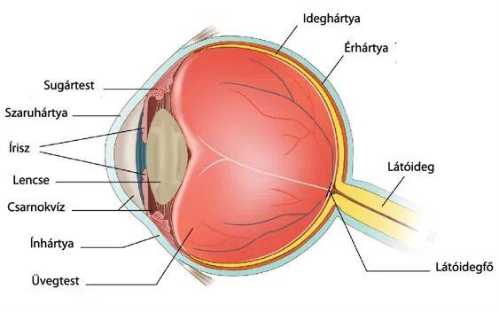 vörös szemfoltok kezelése a szemhéjon kiterjedt vörös foltok a lábakon