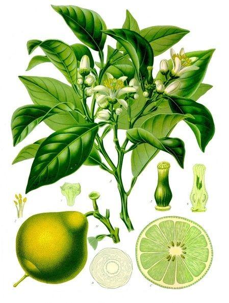 citromlé pikkelysömör kezelése
