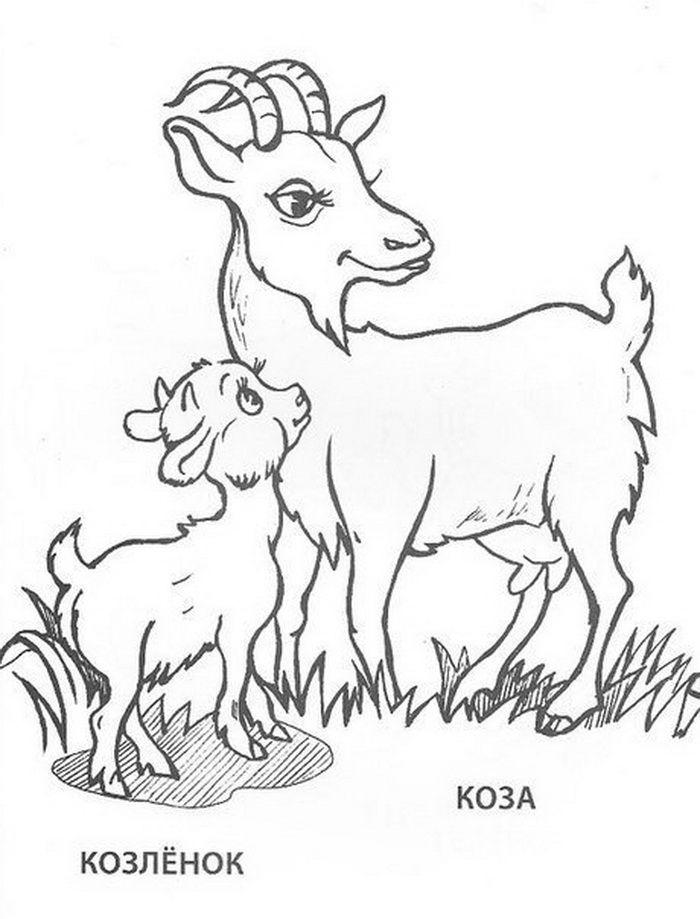 kecsketej kezeli a pikkelysmr