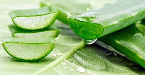 Aloe verát pikkelysömörre, ekcémára, bőrallergiára és bőrgyulladásokra - Egészségtér