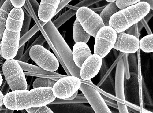 viasz moly pikkelysömör kezelése a bőr pikkelysömörének kezelése népi gyógymódokkal